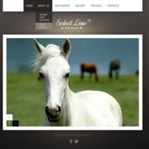Horse Website Template