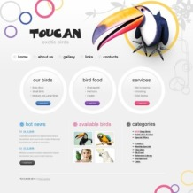 Birds Flash CMS Template