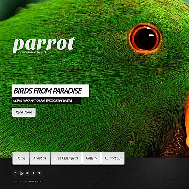 Birds Moto CMS HTML Template