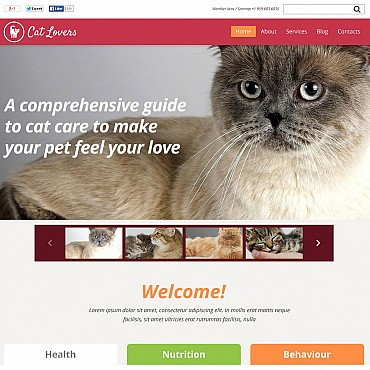 Cat Flash CMS Template